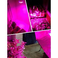 Grow Light GU10 5w